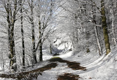 Trail in a forest in winter Royalty Free Stock Photo