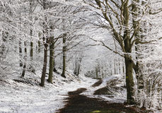 Trail in a forest in winter Royalty Free Stock Photos