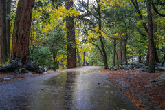 Trail in the Forrest at Yosemite National Park. Trail into a forrest at Yosemite National Park Stock Images