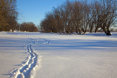Trail on the Frozen River. A trail is etched out on the frozen river Stock Image