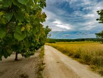 Trail between fruit trees. Country road between plantation of fruit trees of apricots stock images