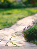 Trail in garden Royalty Free Stock Photography