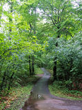 A trail in Gartineau park.  Stock Photo