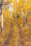 Trail in Golden Aspen Forest Stock Images