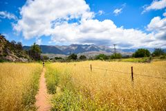 Trail through a golden field on a sunny summer day stock image