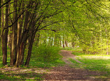 Trail in green blossoming spring forest, nature background Stock Image