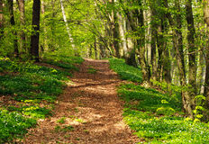 Trail in green blossoming spring forest, nature background Stock Photos