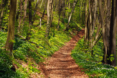Trail in green blossoming spring forest, nature background Stock Photography