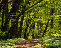 Trail in green blossoming spring forest, nature background Royalty Free Stock Photos