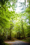 Trail in green forest Stock Photography