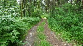 A trail in a green forest stock photos