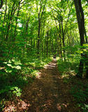 Trail in green forest in sunlight Stock Photos