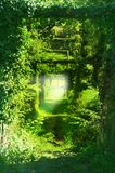 Trail in the green tunnels of the branches of trees, grass, climbing vines. Image stock photo