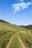 Trail through green vineyard landscape Royalty Free Stock Photos