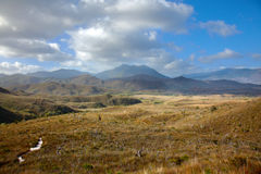 Trail through highland meadows in Tasmanian mountains. Southwest national park, the island of Tasmania. The grass is yellow and dry, protruding bush branches stock photos