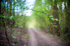 Trail for hike Royalty Free Stock Photos