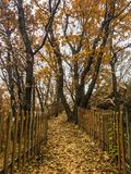 Hiking. Trail hiking lovely happy day colorful live life wonderful fall foggy vacation fun beijing world Stock Image