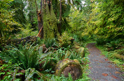 Trail through the Hoh Rain Forest Royalty Free Stock Image