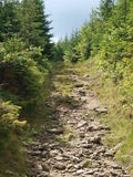 On the trail. Holidays Szczyrk Conifers and gravel highway for On the trail leading to the summit Malinówka Royalty Free Stock Images