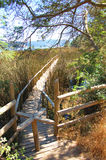 Trail i skog Royaltyfri Fotografi