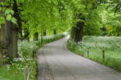 Trail i skog Royaltyfri Foto