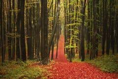 Trail i skogen Arkivfoto