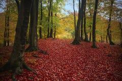 Trail i skogen Arkivbild