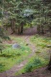 Trail i skogen Arkivfoton
