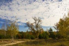 Trail i skogen Arkivbilder