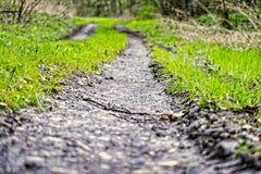 Trail i skogen Royaltyfri Bild