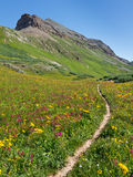 Trail through Idyllic Alpine Meadow Stock Images