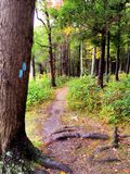 Burr Pond state park hiking trail. A trail inside Burr Pond state park woods in Torrington Connecticut United States royalty free stock photos