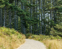 Trail inside the forest in Cape Disappointment state park Washington USA. Royalty Free Stock Images