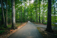 Trail at Jetton Park, in Cornelius, North Carolina. Stock Photography