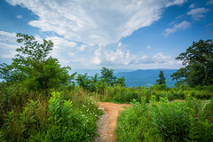 Trail at Jewell Hollow Overlook, on Skyline Drive, in Shenandoah Stock Photography