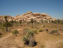 The trail in Joshua Tree NP Stock Photo