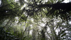 Trail in jungle stock footage