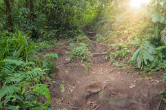 Trail in the jungle of the volcano Merapi Royalty Free Stock Photography