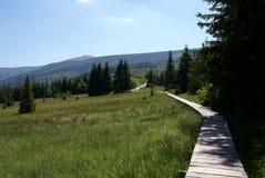 Trail in Karkonosze  mountains Royalty Free Stock Photo
