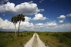 Trail Through Kissimmee Prairie Preserve Royalty Free Stock Photos