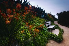 Trail in La Jolla. Bench and colorful flowers on a trail in La Jolla, California royalty free stock image