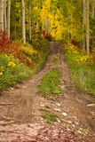 Trail leading into the Aspen Trees. A hiking trailleading into the Aspen grove in the Fall stock photos