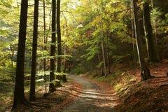 Path through autumn forest at dusk stock photos