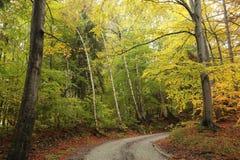 Path through an autumn forest stock photo