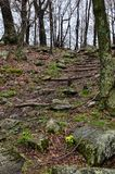 Trail leading to Little Stony Man mountain overlook in Shenandoah National Park along Skyline Drive in Virginia on a spring day.  royalty free stock photos