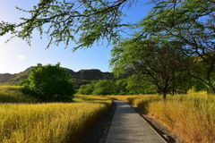 Trail leading to the summit of Diamond Head volcano Stock Photos