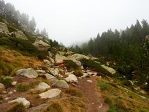 Trail leading up to an enchanted forest surrounded by fog and mist, Lac des Bouillouses, Font-Romeu royalty free stock photo