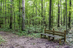 Trail leads through an Alabama park with a wood bench Royalty Free Stock Images