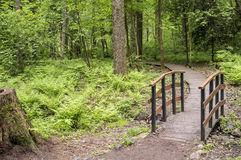 Trail leads to a small wooden bridge over a creek in the woods. Stock Images