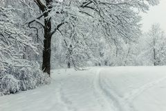 The trail, leaving the forest in the park in the winter afternoon. Landscape royalty free stock photography